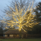 Grote boom met kerstverlichting