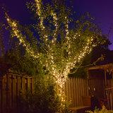 boom met 70 meter boomverlichting