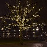 boom met 300 meter boomverlichting