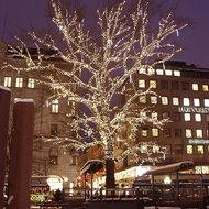 boomverlichting grote boom